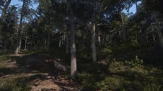 Natural Bohemia - Forest Demo