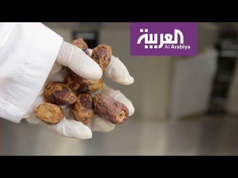 العرب اليوم - شاهد: استخدامات طبية غير متوقعة للتمر في الأحساء