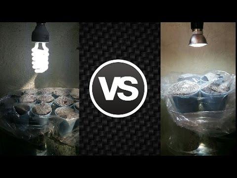 Luz Económica y Eficaz Crecimiento de Plantas Investigación y Pruebas LED vs CFL Parte 3