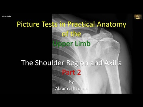Test obrazkowy - anatomia stawu ramiennego i dołu pachowego część 2