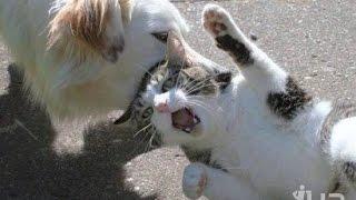 Забавные жевотные котики