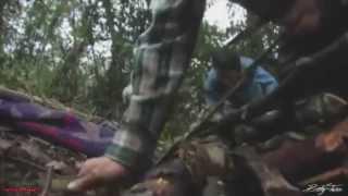 Video Pura Sangre Michoacana de Buknas de Culiacan