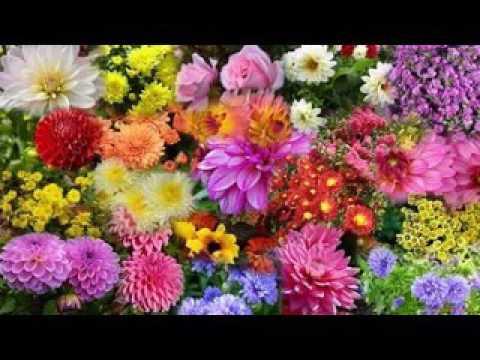 Варламов веснушки минусовка