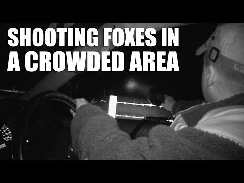 Shooting Foxes in a Crowded Area
