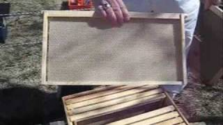 Starting a New Bee Hive