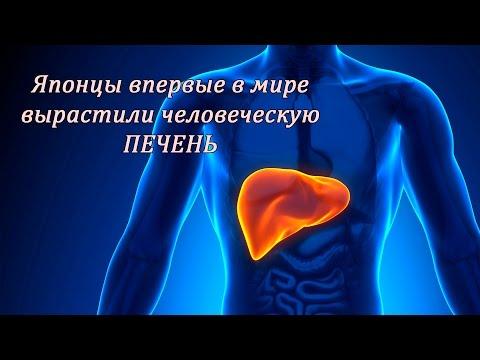 Жировой гепатоз печени лечение содой