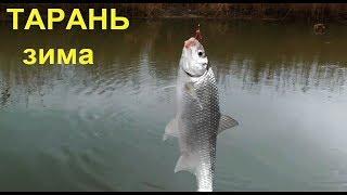 Ловля Тарани зимой на Кубани в проводку и на донку. Рыбалка, хутор Труд, Садки.Fishing