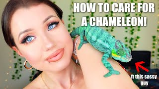 WATCH THIS BEFORE YOU GET A CHAMELEON.. (Care Guide, Setup + Tips!)