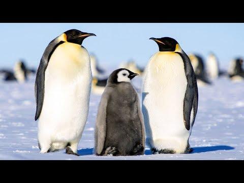 南極郵輪 福克蘭群島 南喬治亞島 南極洲極地探索28日 USH25B