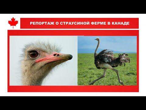 Страусиная ферма «Ostrich Land»