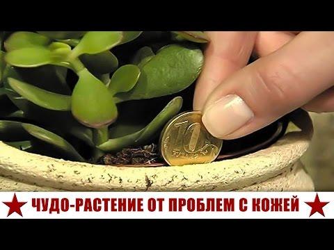 Купить возбудитель для женщин в аптеке украина