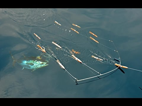 Blåfinnet tun på gummidyr