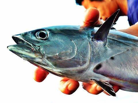 โรคสะเก็ดเงินทะเล 2015