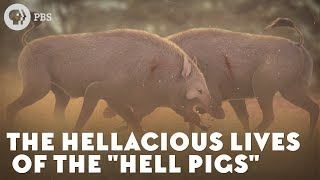 "The Hellacious Lives of the ""Hell Pigs"""