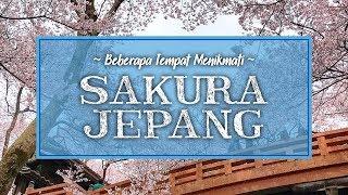 Beberapa Tempat Melihat Bunga Sakura di Jepang, dan Jadwal Mekarnya Selama Tahun 2020