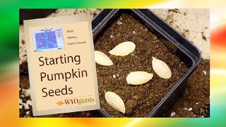 How To Plant Pumpkins Seeds (Tips and Tricks)