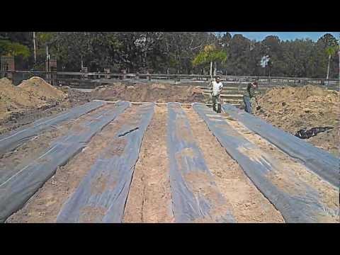 Septic System Drain field in Odessa FL
