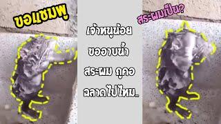 ฉลาดเกินหนู!! หนูตัวนี้รู้วิธีอาบน้ำแบบคน แปลกแต่จริง!!... #รวมคลิปฮาพากย์ไทย