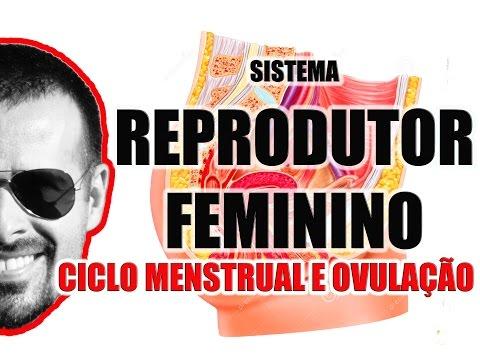 Ciclo Menstrual (menstruação) e Ovulação - Sistema Reprodutor Feminino - VideoAula 050