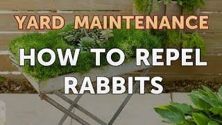 How to Repel Rabbits
