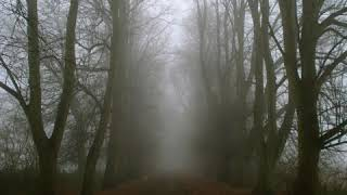 The Woodwoman - Bathory