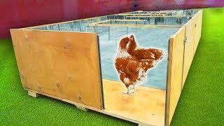 Как нарисовать курицу которая клюет зерно