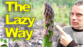 How To GROW Asparagus   The LAZY Way!