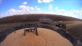 Minas Gerais se prepara para novo recorde na colheita de grãos
