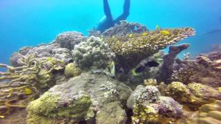 Scuba Diving - Whitsunday Islands - 10/05/14 - with a turtle bonus