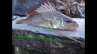 Рыболов поймал 15 окуней ершей в 3 раза меньше