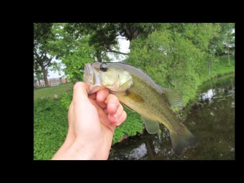 Spinner Fishing at the Brighton Mill Pond – Video #1
