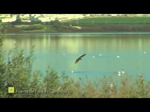 Fauna de la Gran Senda de Málaga