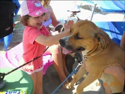 Spiaggia cani  Rimini: vacanze con animali al bagno Egisto 38