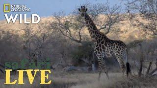 Safari Live - Day 192   Nat Geo Wild