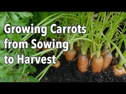 , title : 'Growing Carrots from Sowing to Harvest'