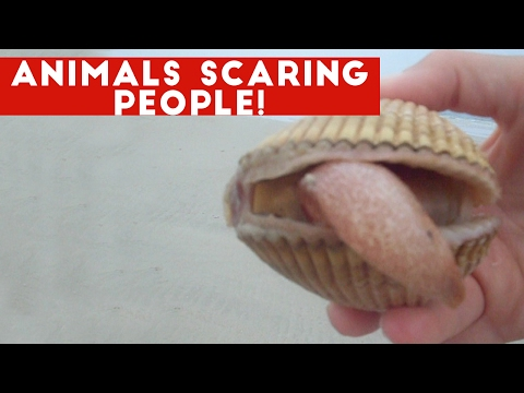 Funniest Animals Scaring People Reactions of 2017 Compilation | Funny Pet Videos