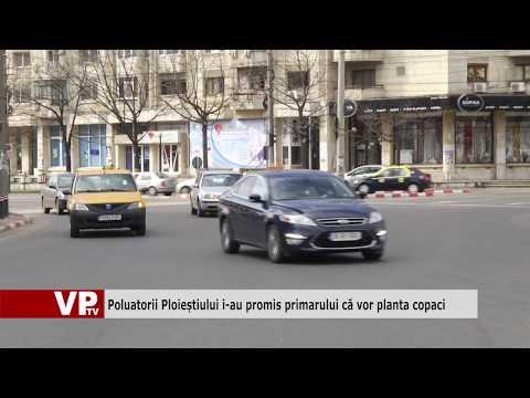 Poluatorii Ploieștiului i-au promis primarului că vor planta copaci