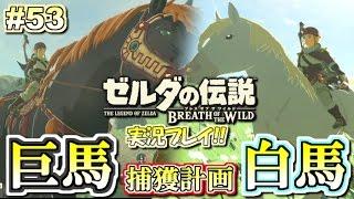 【NS】巨大馬&白馬捕獲大作戦!ゼルダの伝説 ブレスオブザワイルド 実況プレイ!#53【ニンテンドースイッチ】