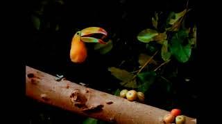 Video Rain forest by Pavel Kušnír Namaskar Hotab