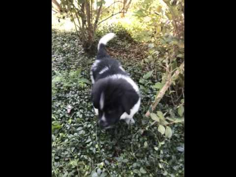 Blackhawkbabe#8 - In the woods