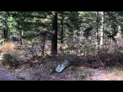 Video Of Boise National Forest Bad Bear Campground, ID
