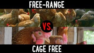 The Difference Between Free-Range Vs. Cage Free Chicken & Eggs: What To Know | Food 101 | Well Done