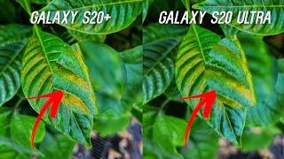 Samsung Galaxy S20 Ultra vs Samsung Galaxy S20+ Camera Comparison Test: WOW!
