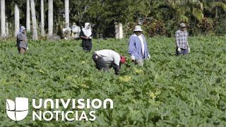 Aprueban proyecto de ley que incluye camino a ciudadanía para trabajadores agrícolas indocumentados