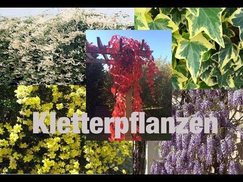 Schluss mit kahlen Wänden // 6 Kletterpflanzen