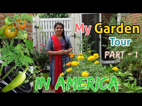 My #Gardentour in USA ఈ చిన్న గార్డెన్లో ఎన్ని రకాల కూరగాయలు,పండ్లు,పూలు పెంచానో చూడండి Rekha vlogs