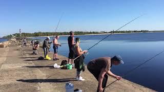 Клев рыбы в латвии