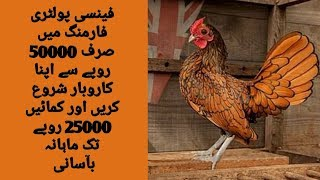 fancy hens farming in pakistan - Video hài mới full hd hay