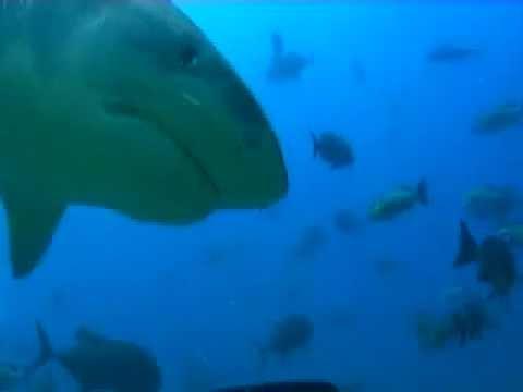 Nurkowie dokarmiają rekiny