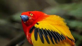 Unbelievable Bird Behaviours | BBC Earth